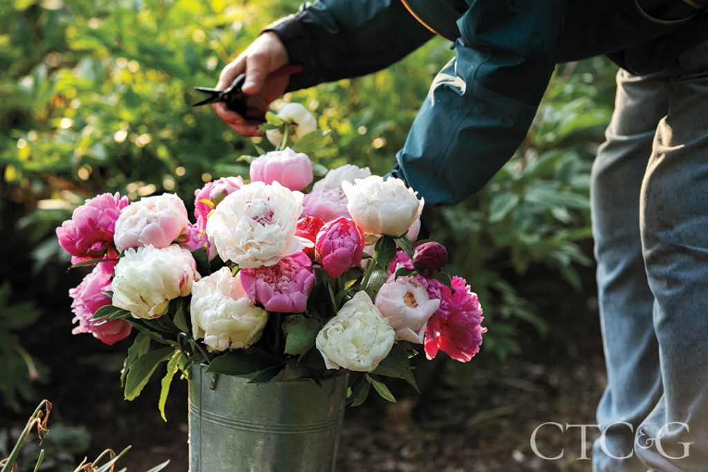 Brad French Tends To Bucket Of Peonies At His Weston Home