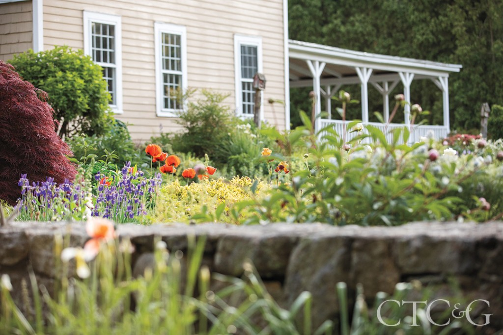 Brad French's Poppies And Irises At His Weston Home