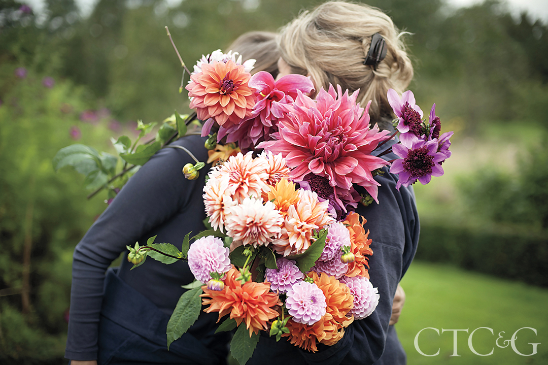 Gathering Dahlias In The Early Morning
