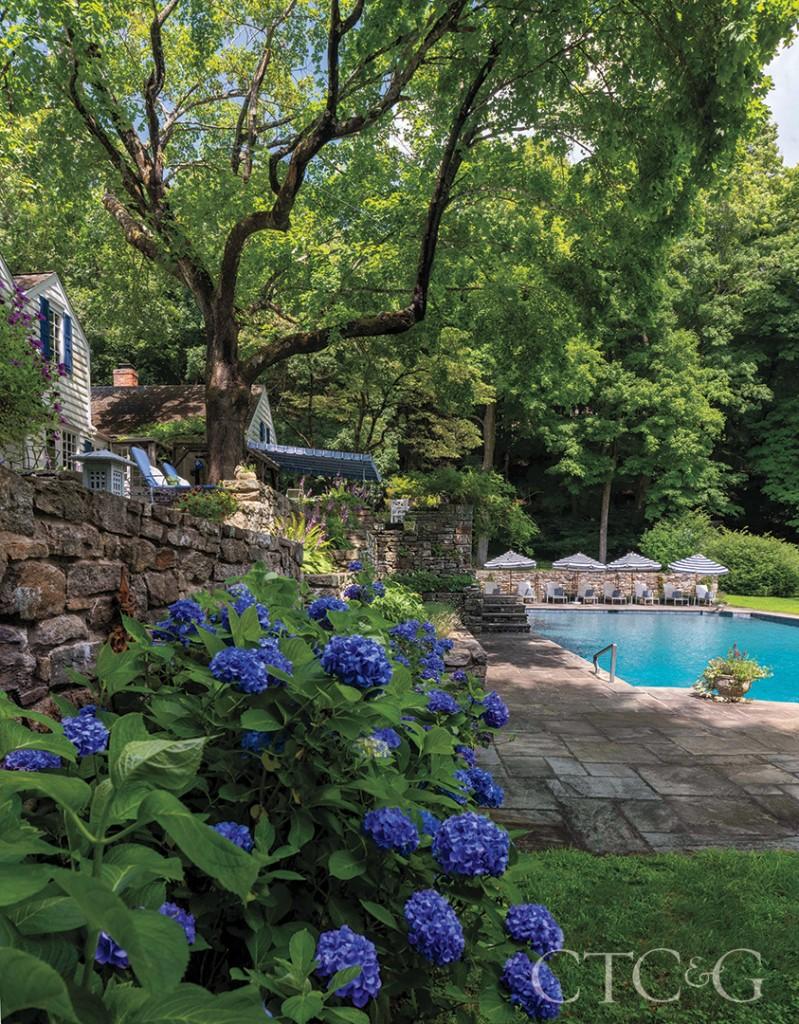 Blue Hydrangea In Backyard At Alice Delamars Weston Estate