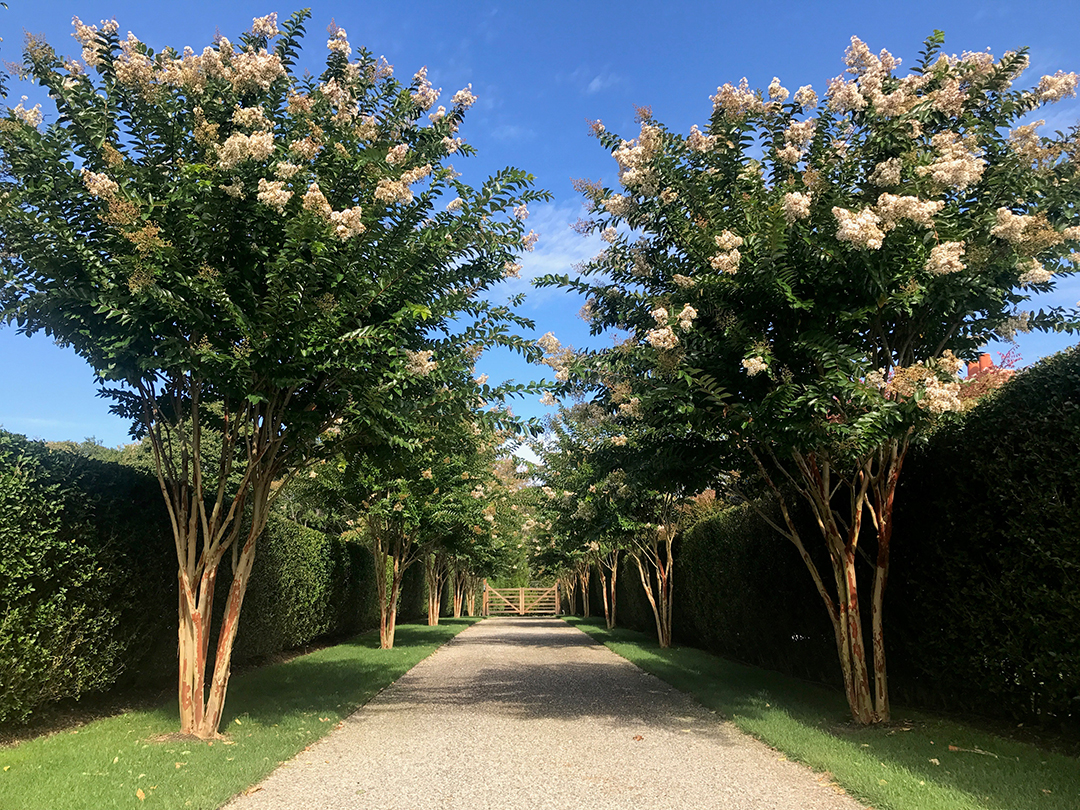 All About Hamptons Landscape Design And Trends With Groundworks Linda Silich Credit Anthony Daunt Driveway