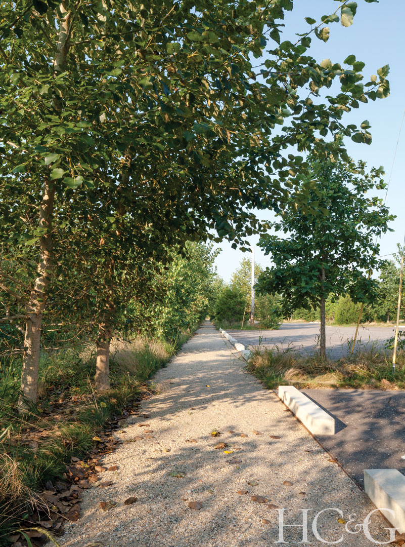 The parking area is surrounded by a native woodland and a border of birches and poplars.