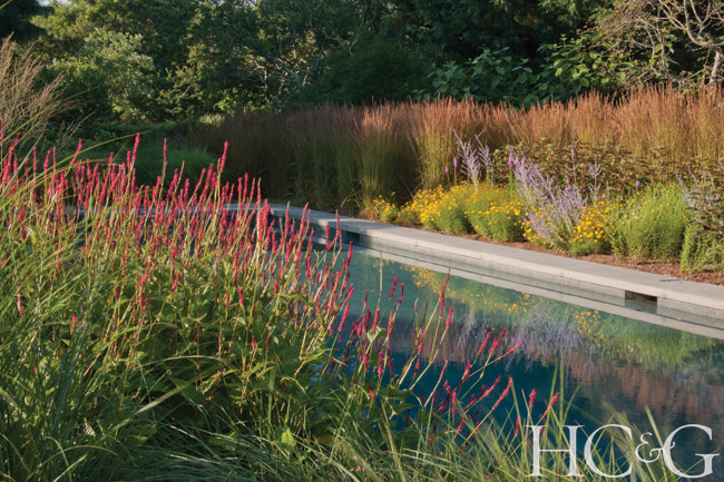 Persicaria 'Firetail' blends well with Calamagrostis, Carex, and Spartina.
