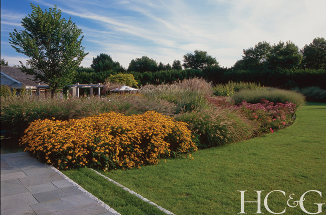 A bold stand of native Rudbeckia brings color to the edge of a pond surrounded by a mix of Panicum and other grasses.